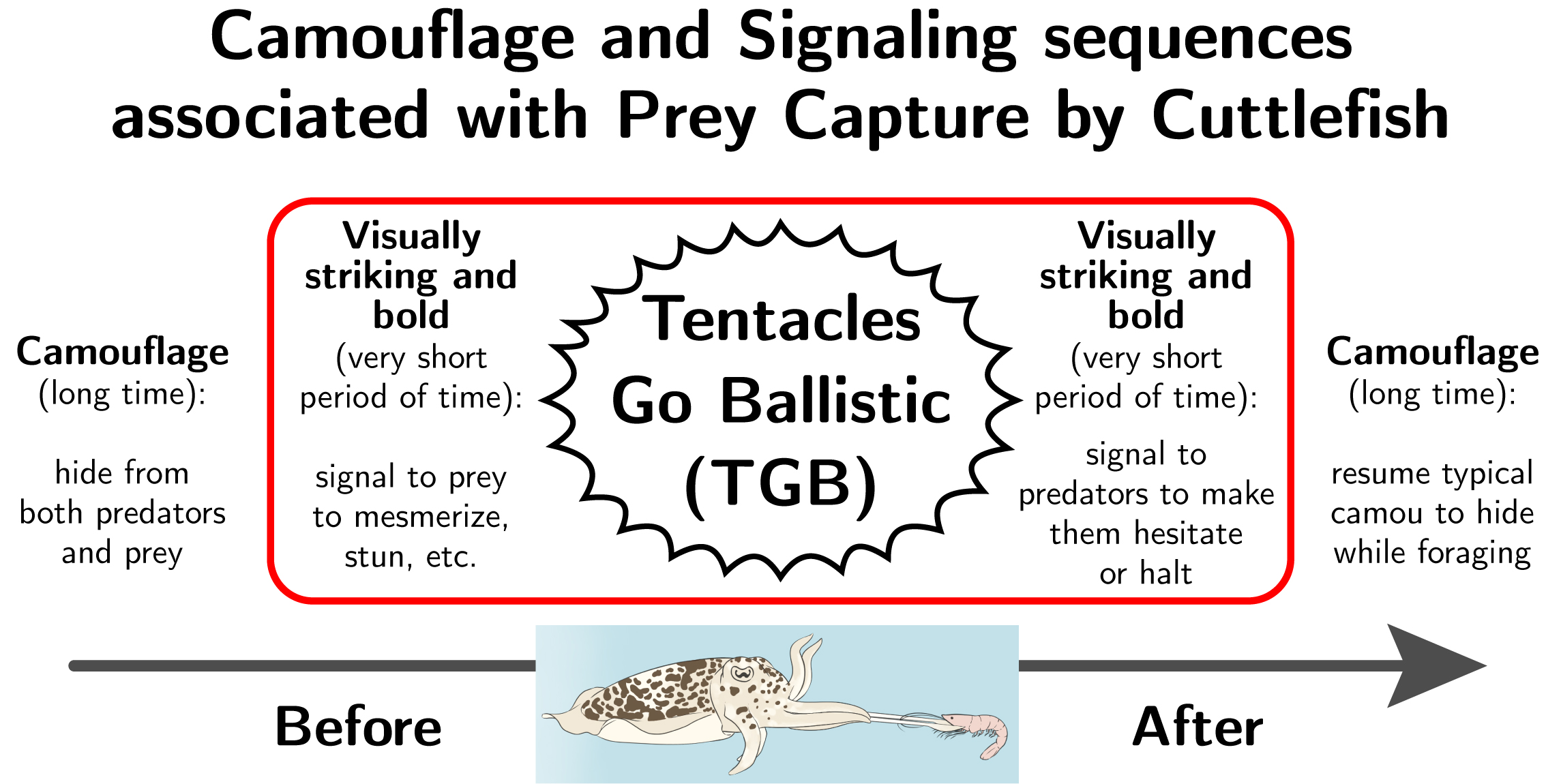 Camouflage and signaling sequences associated with prey capture by cuttlefish