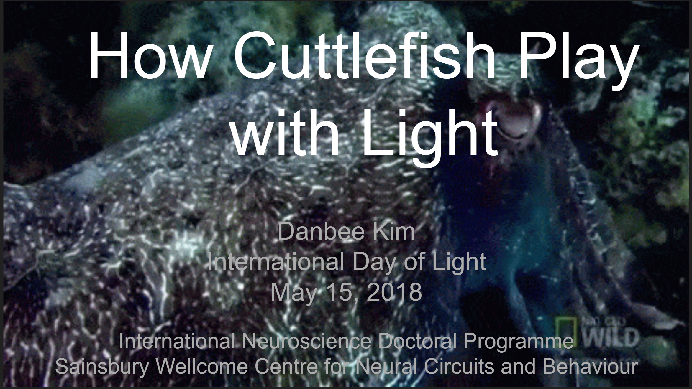 Danbee talks about cuttlefish at UCL's 2018 International Day of Light celebration.
